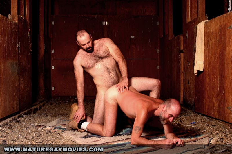 gay sex in the barn