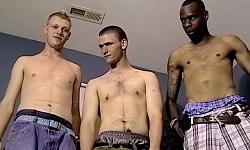 Dee, Nimrod and Jay