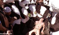Panda Rapists
